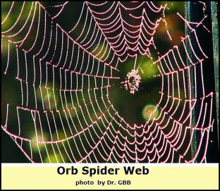spider-web1