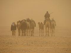 wind-sand-storm-camel