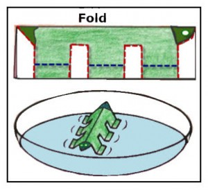 The two diagrams show the side view of an insect drawn on a folded index card. The cut out model stands on water due to surface tension.