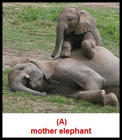 inertia-elephant-laying-down1