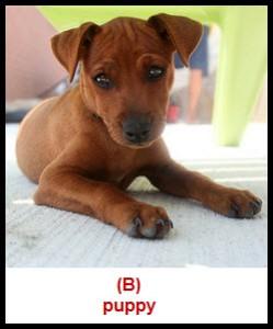 inertia-puppy-laying-down