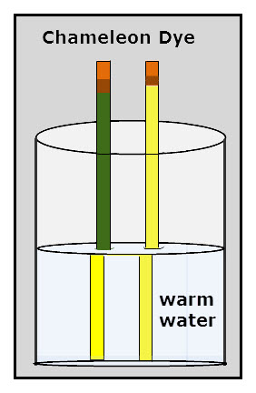 The pencil that changes color in the warm water has a yellow coat of paint which is covered with a paint contining chameleon dye. This dye becomes transparent when warm, thus the yellow color of the pencil is visible.