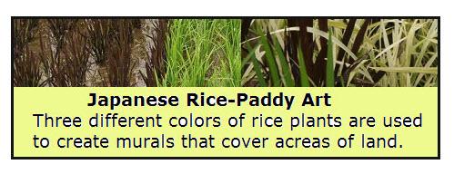 rice-paddy-art1