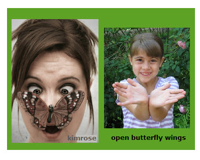Butterfly: Open Wings