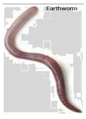 earthworm-parts