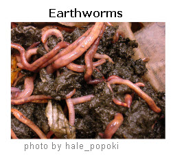 earthworms2