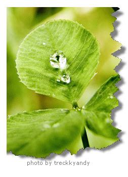 water-drop-leaf