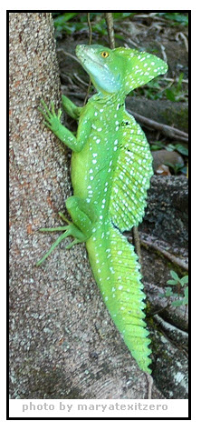 lizard-jesus-12-17-2010-10-13-31-am