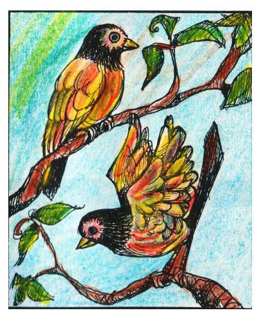 Multicolored Birds