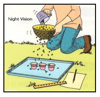 vision-night