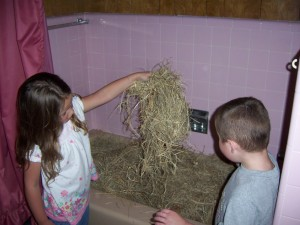 Bathtub Hay