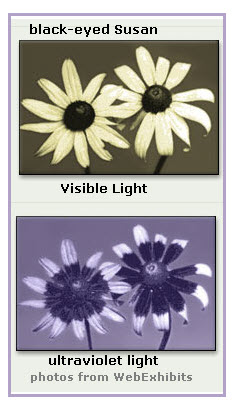 Visible Light vs. UV Light