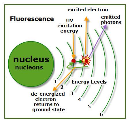 Fluorescence Model