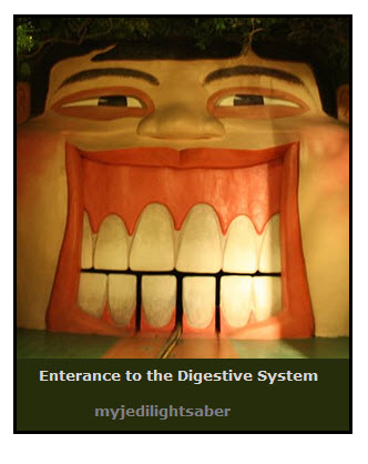 Digestive System Glossary | JVC's Science Fair Projects