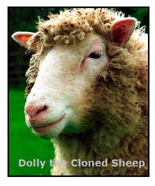 Cloning Dolly the sheep