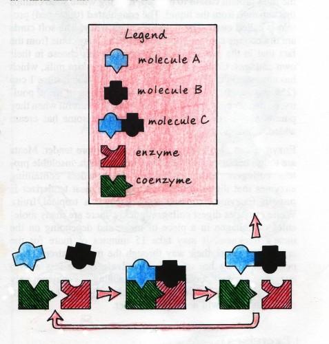 Coenzyme