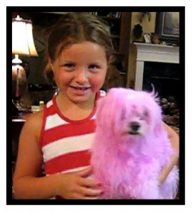 A girl is holding a dog with hair dyed pink; the phenotype of the dog is not inherited.