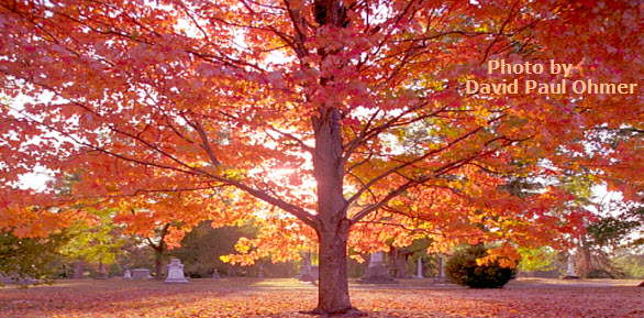 Why Autumn Leaves Fall