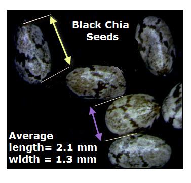 Black Chia Seed Measurements