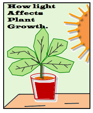 How the Independent Variable of Light affect the Dependent Variable of Plant Growth