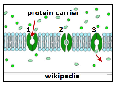 Protein Carrier