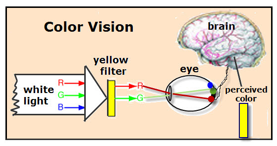Color Vision VanCleave's Science Fun