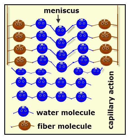 This Animated Diagram Of Water And Fiber Molecules Models Capillary