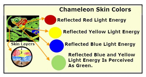 The diagram models an enlargement of a cut-away view of a chameleon's skin layersd with various pigments. The reflected light energy from cell pigments forming different colors is shown.