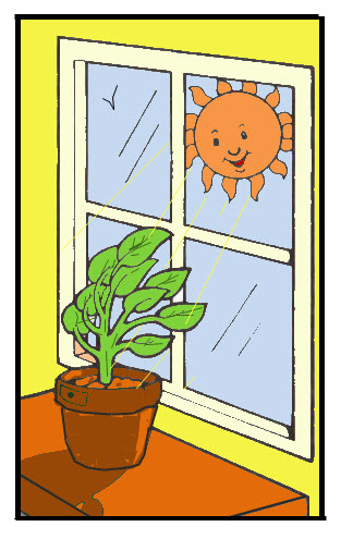 The direction of the plant's leaves depends on the direction of the Sun. Sunlight is the cause—independent variable—and a change in the direction of the leaves is the response—dependent variable.