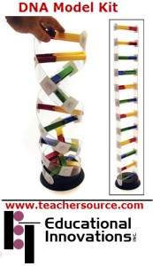A model for the DNA molecule available from Education Innovation.