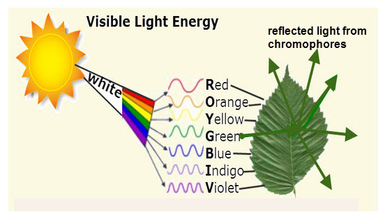 Reflected Light From Chromophores
